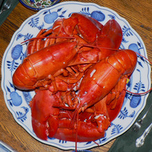 100% Frozen seafood Canadian lobster for sale at moderate prices