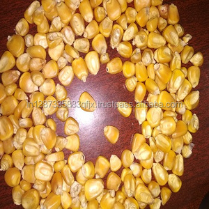 Dry Yellow Maize / Corn For Animal Feed