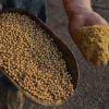 Soyabean Meal Animal Feed/ SOYBEAN MEAL 46% PROTEIN