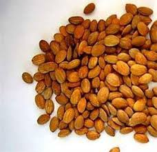 Apricot Seeds, High Grade Apricot Seeds, Apricot seeds and Kennels