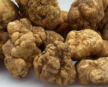 white truffle, fresh truffle for sell good price