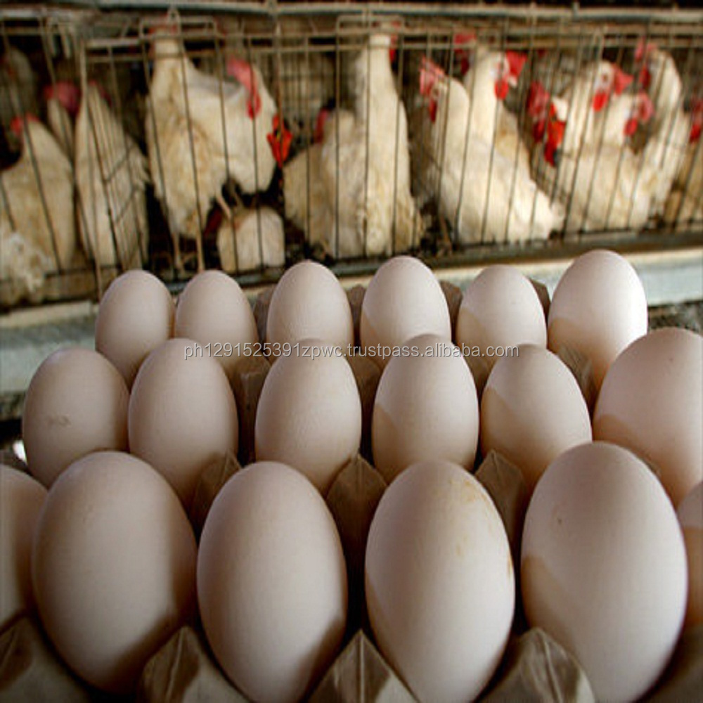Best Quality Organic Fresh Chicken Table Eggs