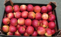 New arrival Fresh Idared Apples For Sale