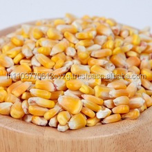 yello corn / yello Maize Product of Thailand
