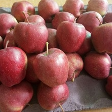 Hot selling Fresh Apple Red Star Apple