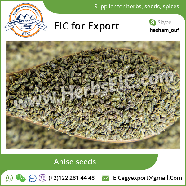 Top Supplier of High Quality Aniseed at Affordable Rate
