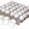 Egg Wholesalers from India