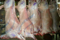 Frozen Mutton, Lamb, Sheep Meat, goat, boar, beef, buffalo, cow, chicken, calf