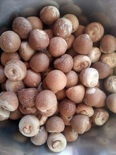 High quality Betel Nuts 100% cheap price For Sale