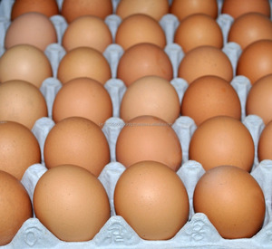 Best Quality Fresh Farm poultry eggs