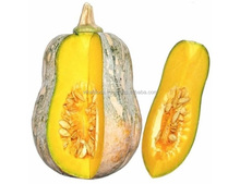 FRESH PUMPKIN WITH THE BEST PRICE WITH LARGE QUANTITY