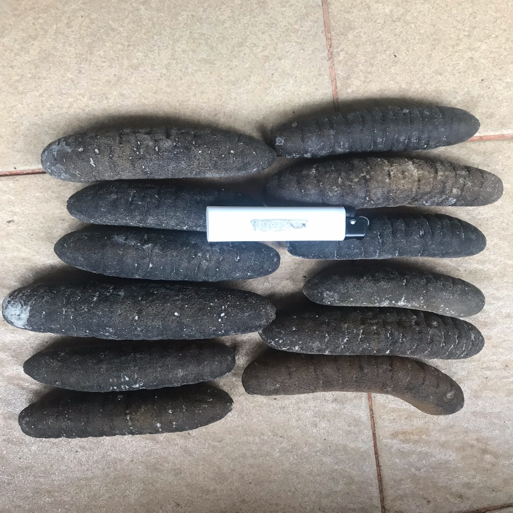 Dried Sea Cucumber from Indonesia (Sandfish)