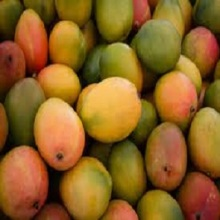 Fresh Fruits Mango