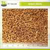 /product-detail/wholesale-wheat-grain-for-animal-feed-human-consumption-146046671.html