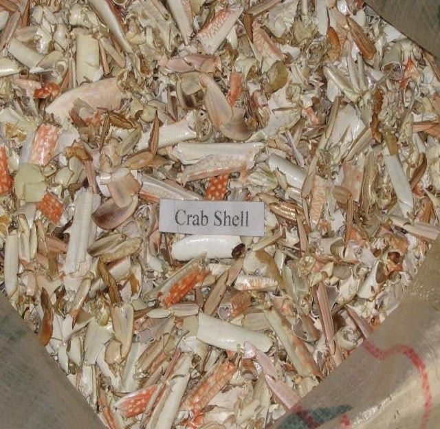 CRAB SHELL FOR ANIMAL FEED SUPPLEMENT/SUPPLY CHITTOSAN
