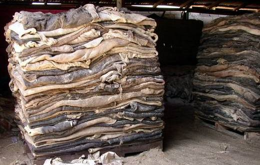 100% Wet Salted Donkey Hides & Cow Hides, Goat and Sheep Skin. Best Quality Competitive Price Hot