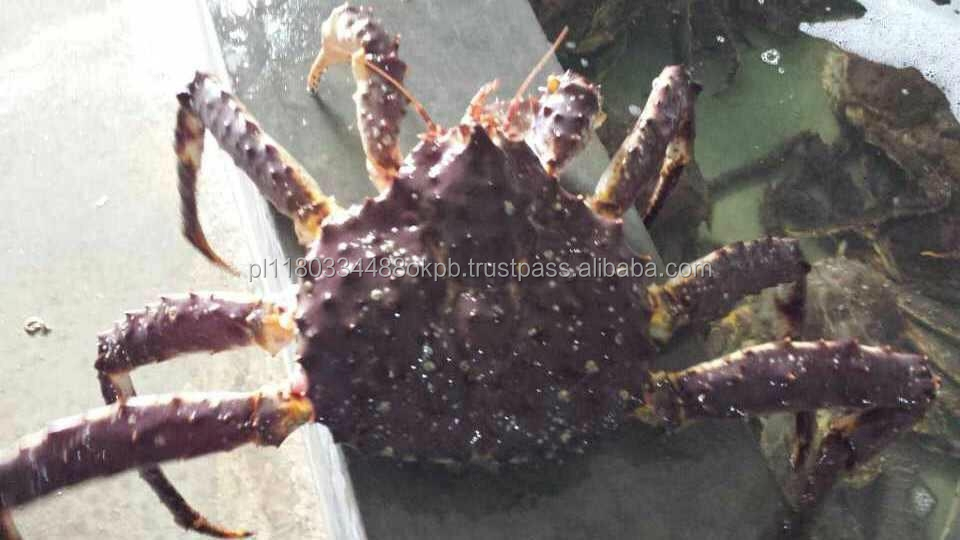 Russian Imperial crab live red crab.