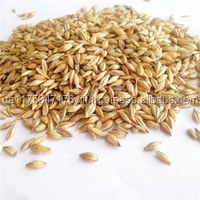Animals feed barley with cheap price