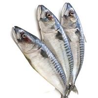 A Grade Pacific Mackerel Ready For Shipping sea food frozen