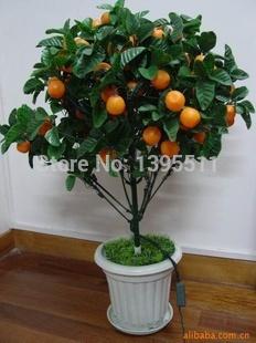 30 pcs Bonsai Apple Tree Seeds rare fruit bonsai tree– indoor plant for home garden free shipping via hongkong post airmail