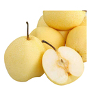 Shanxi Yuncheng exports a large number of tribute pears, sweet and crispy