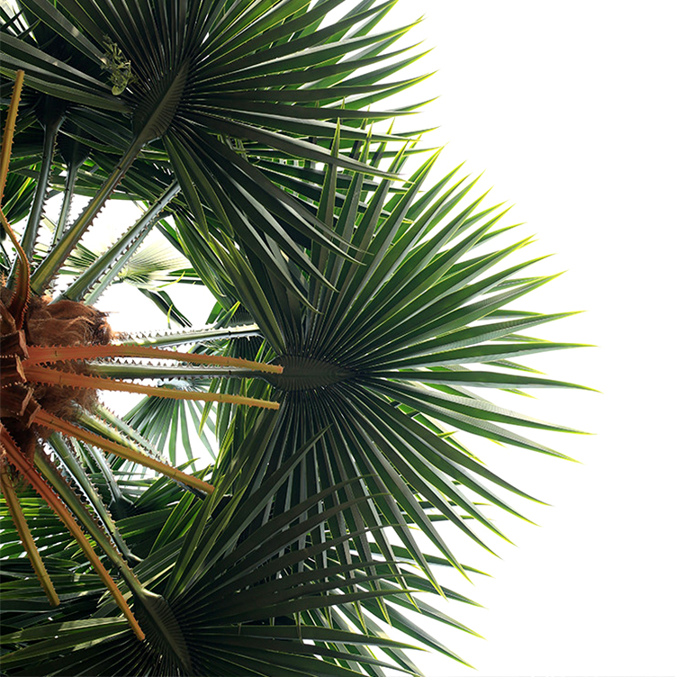 High Temperature Resistance Anti-UV Large Artificial Royal Palm Tree Leaves