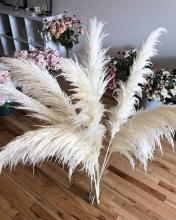 Pampas Grass Royal White Extra Fluffy 3 ลำต้นขนาดใหญ่ 46 '' - Home Decor Boho แห้ง Wedding Plant