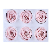 Newly A grade 5-6cm Naked powder real preserved rose flower rose head