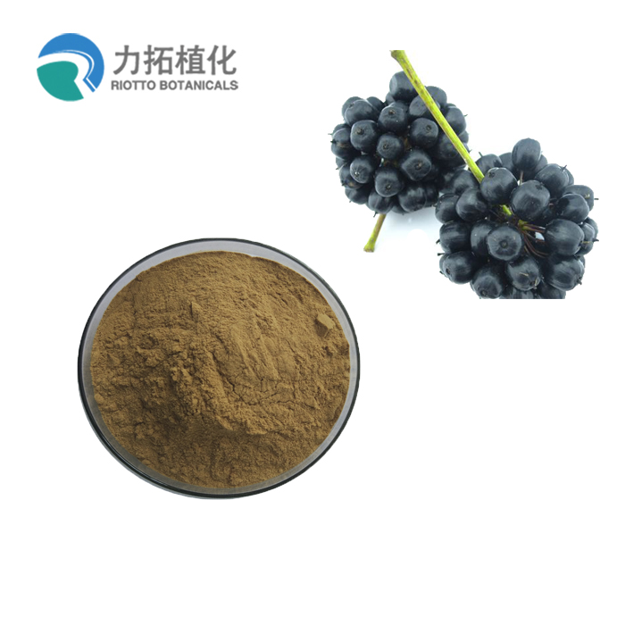 Siberian Ginseng Root Extract Powder