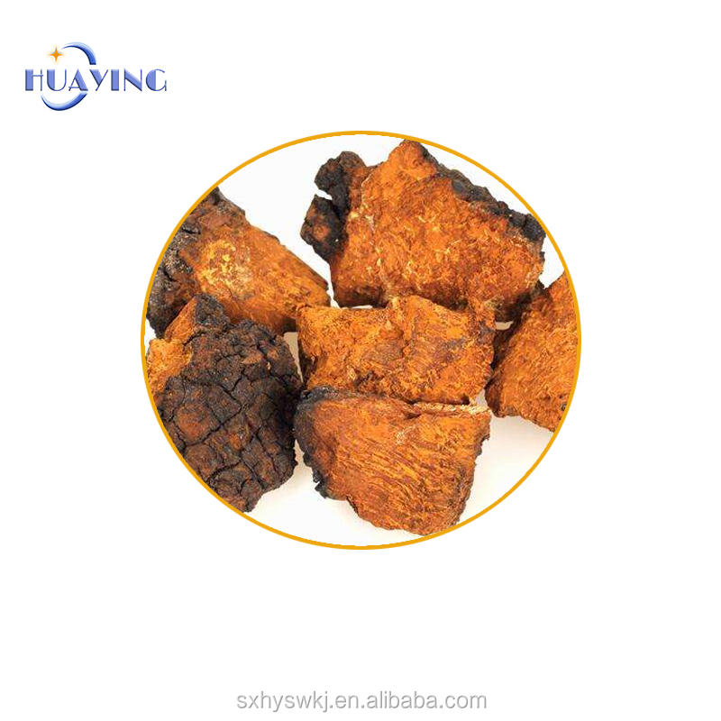 Factory wholesale health-care chaga extract With Best Quality And Low Price
