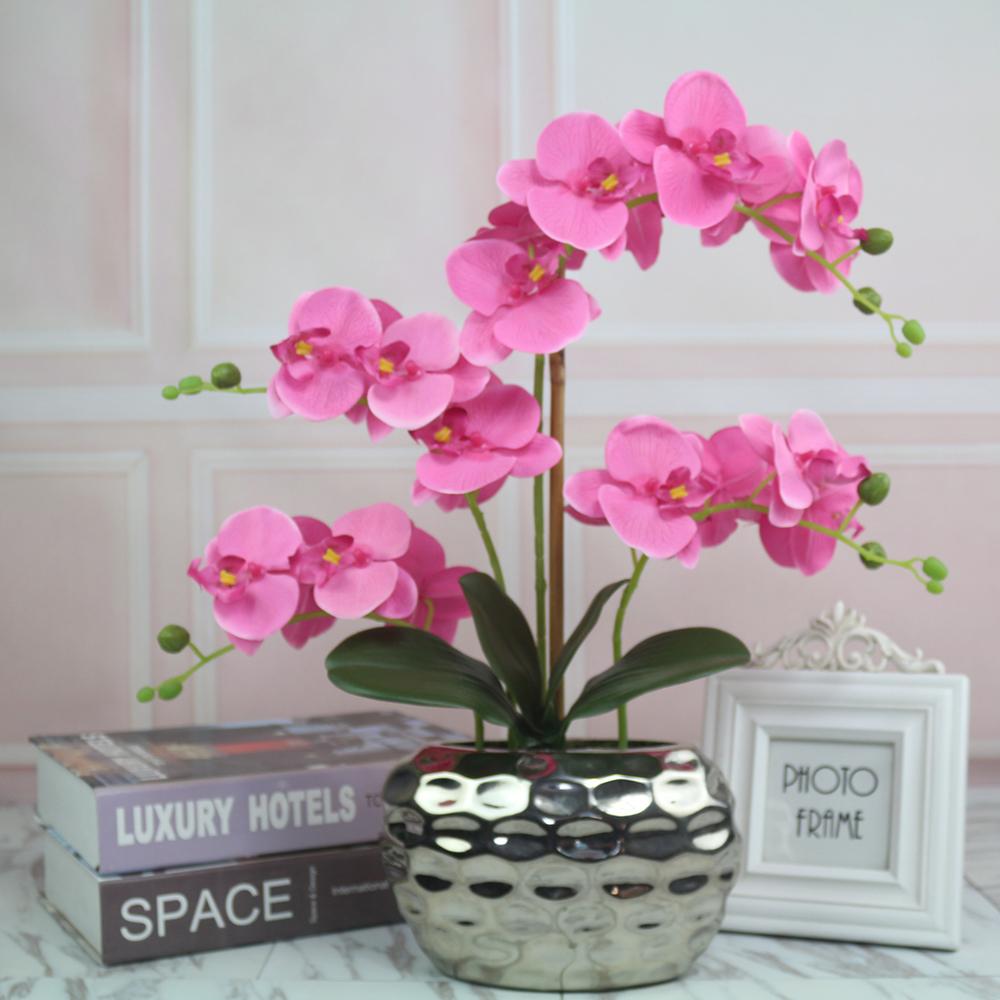 tanzen orchidee blume schmetterling orchidee getrocknete