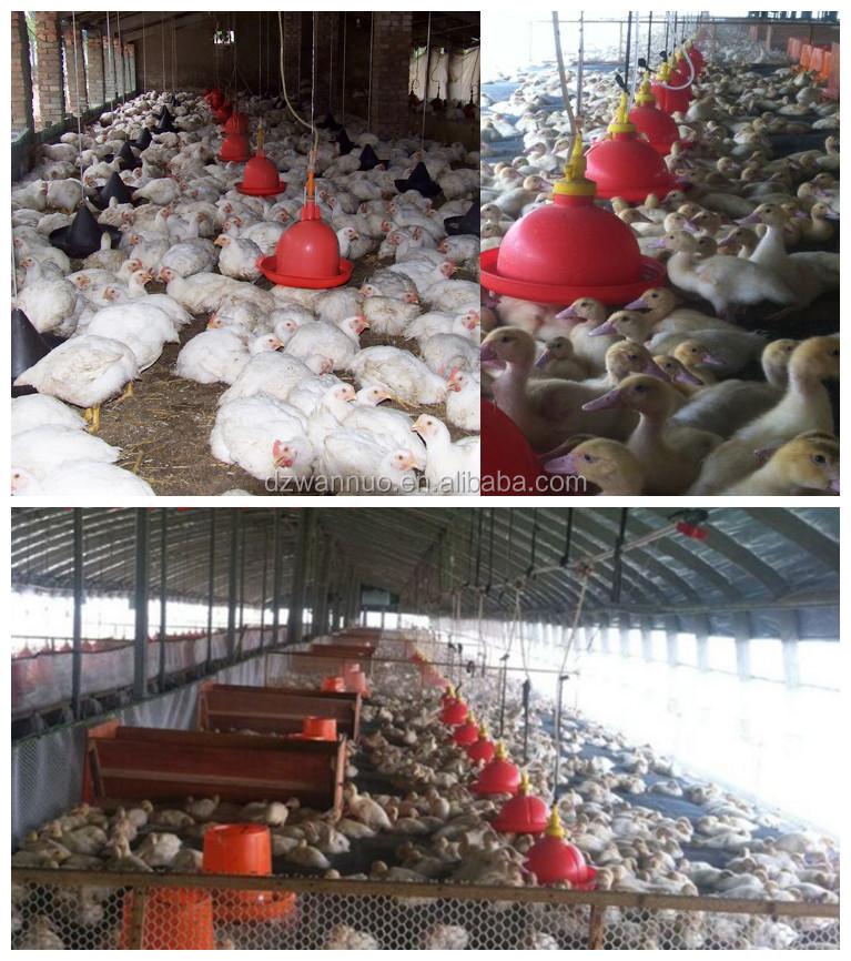 Haute qualité automatique buveur de volaille mangeoires et abreuvoirs à poulet pour boire de la volaille de type C