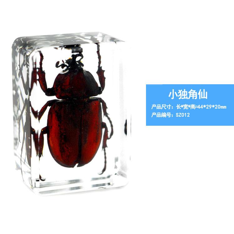 Insecte Vert Scarabée Spécimens Transparent Résine Presse-papier Collection