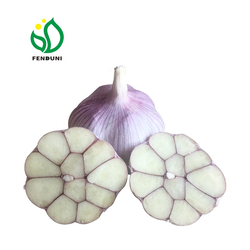 cheap price fresh garlic