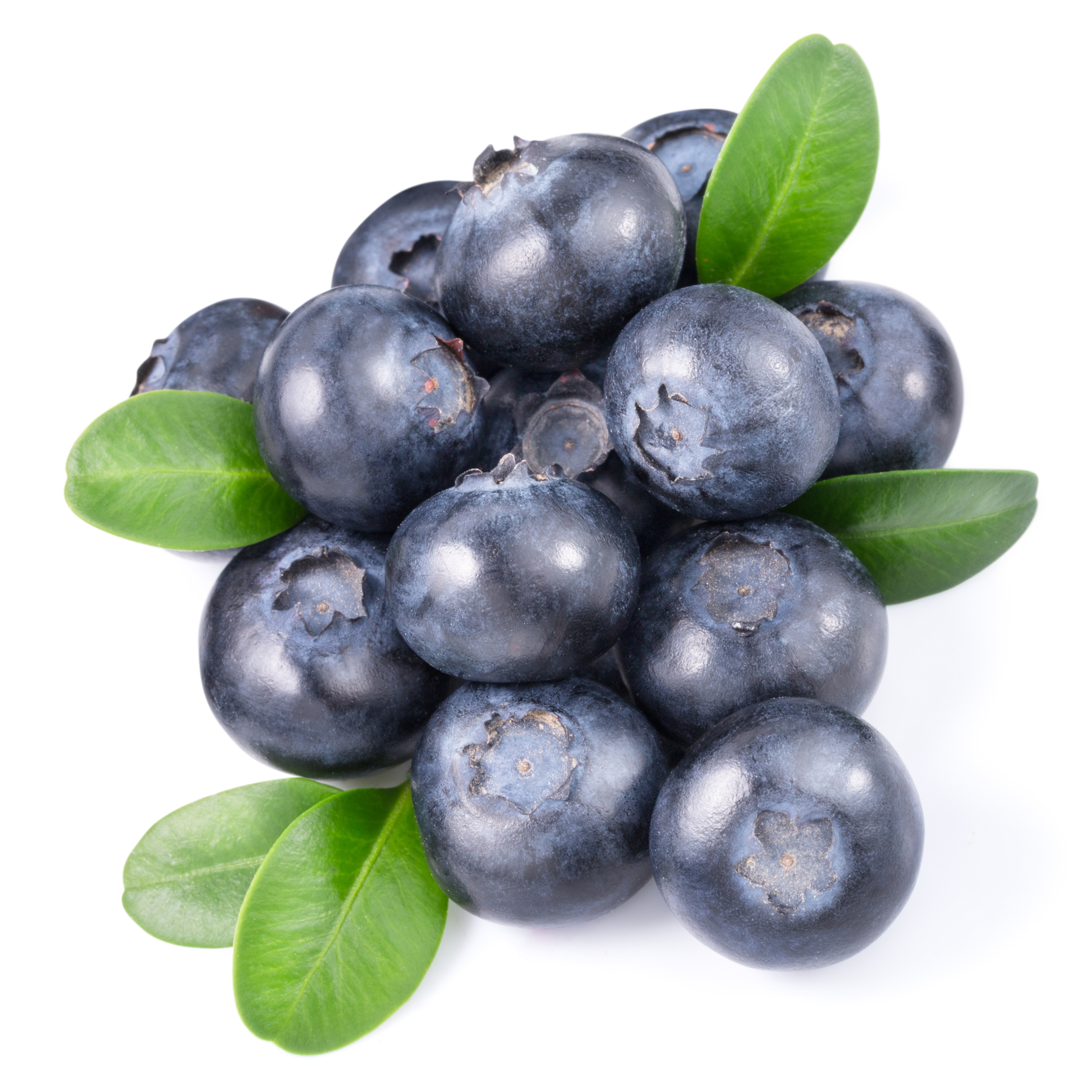 Wholesale Perfect Pact Fresh Blueberries sourced from family farms in the USA