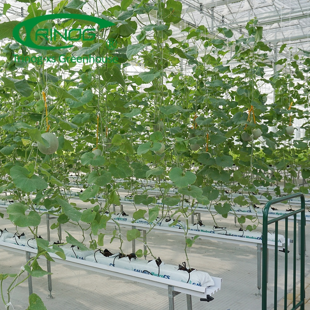 Industrial substrate nft hydroponic systems for tomato