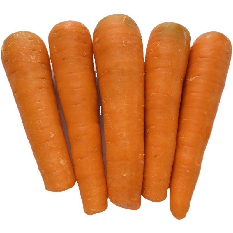 Fresh Carrots for sale non-peeled carrots