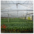 Made In China Industrial Hemp Greenhouse For Sale