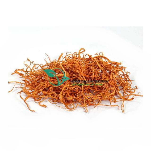 Organic dried cordyceps militaris big spore head / cordyceps militaris mushroom best price high cordycepin