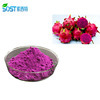 Pure Natural Freeze-Dried Red Pitaya/Dragon Fruit Powder