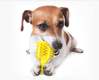 Amazon hot sale Soft Silicone Pet Molar Bite Toy Rubber Non-toxic Dog Cleaning Chew Toothbrush Toys