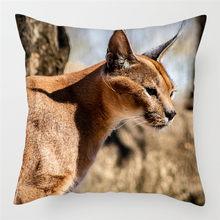 Чехлы для подушек fubatacchi с милым котом, Канадская безволосая наволочка для подушек, наволочки для дивана, домашнего стула, декоративные наво...(Китай)