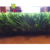 Bright Appearance Beautiful Artificial Sports Grass Lawn Making Machine Equipment
