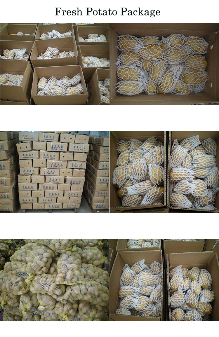 HALAL/GAP 2020 Nouvelles Pommes de Terre Fraîches, Pommes De Terre, Pommes De Terre De Hollande Exportateurs De Semences