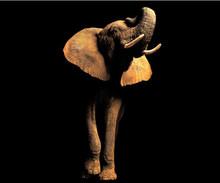 Пользовательские 3D обои настенные слон Животное Черный крыльцо фон обои диван фон украшение стены живопись фреска(Китай)