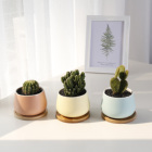 Blue Pots New Pot New Products Blue Plants Flower Pots Cute Succulent Pots Ceramic