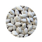 Seeds New Crop Best Quality Snow White Pumpkin Seeds