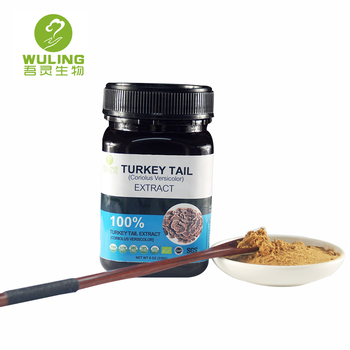 Wild 100 Pure Coriolus versicolor Extract Turkey Tail for Breast Cancer