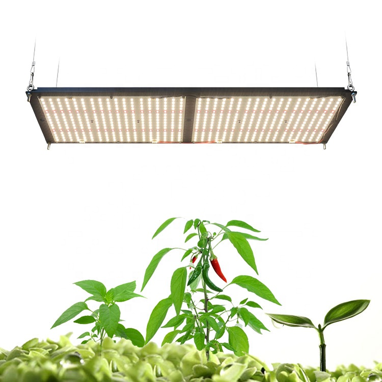 Rita Fang Grow Light, Meijiu Samsung Lm301B 3500K 4000k  Full Spectrum 240W Indoor Plants Far Red 660nm Led Grow Light