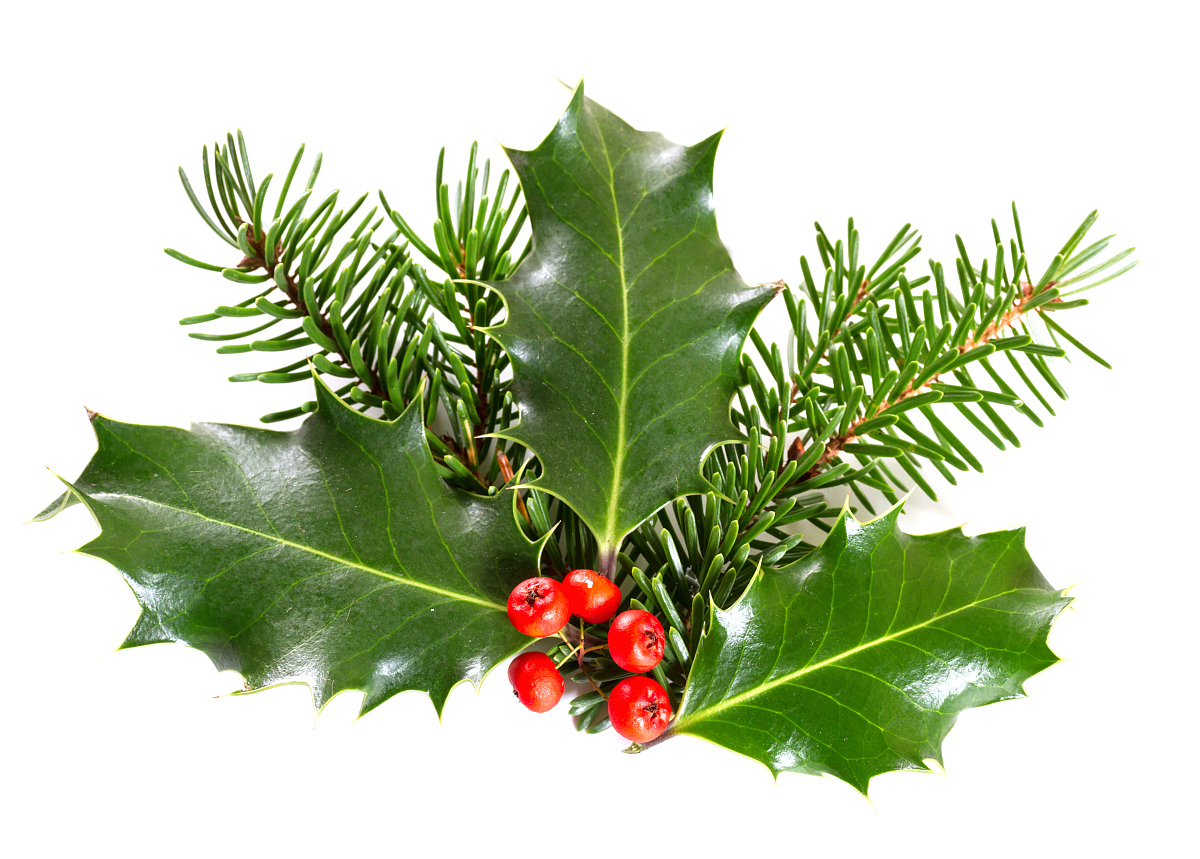 Good quality wintergreen essential oil for medical and skincare bulk